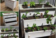 kertészkedés, kert