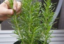 reproducir plantas