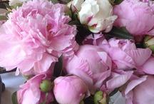 Flores / by Leticia Kazemi