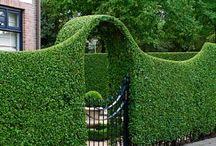 Evergreens - Ikivihreät