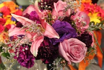 FetchToto Wedding Guide / by FetchToto with KWCH