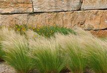 Ornamental grasses / perennial grasses hardy in Hampton Roads VA