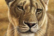Wildlife paintings / Artist