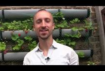 Anyone Can Grow....The Tutorial Videos from growveg.com.... / Growing your own food in what ever sized plot you have to hand, from patio containers to homestead acres......