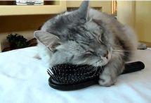 Gatti, dolci passioni!!