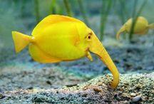 Pisces / Pesti