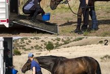 horse behavioural training