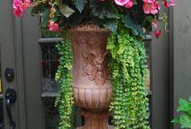 Beautiful Flowers/Outdoors~