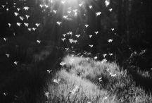black and white photografi