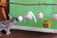 Diy for bunnies