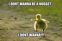 Humorous Pins :-)