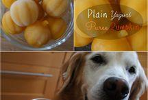 doggie ideas