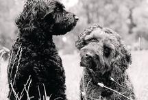 Animals to Adore / by Michelle Belcher