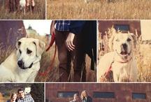 inspiration: dog + engagement