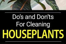 Houseplants care