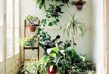 Pot plant balcony