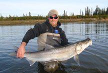 SHEEFISH / Fly fishing for sheefish.  Sheefish on the fly.