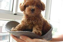 Future pet!?