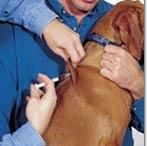 Dogs Health Care / Health Care Articles about Dogs