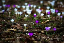 Spring Is In The Air / by Gadling