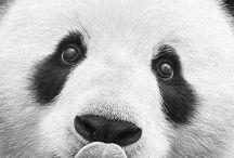 PANDAS!!!!! / by Kimi Skyles