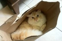 Animals - Cats: Boxes. and Sacks / Cats love boxes . . .