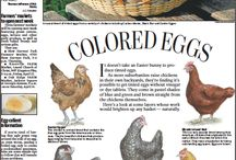 How to... Chickens