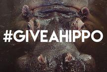 #GIVEAHIPPO