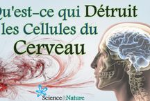 youtube Science et nature / video Science et nature https://youtu.be/5EO-TETHcK8