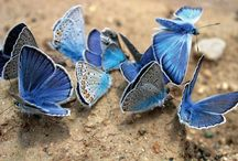 Butterflies / by Jennie Simons