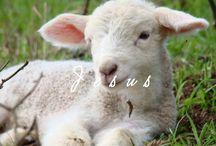 A Palavra de Deus - La Palabra de Dios / Mensagens edificantes nos idiomas português e espanhol - Leia mais em http://paessemfermento.blogspot.com.br/