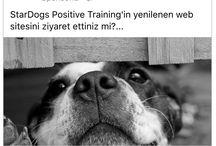 StarDogs Positive Training - Türkiye