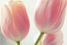 Tulips and Other Flowers / by Kristen Savko