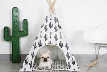 """""""Casas"""" para cães"""