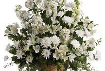 Sympathy and Funeral Flower Arrangements