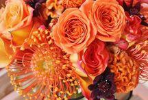 My flowers / by Chelsea Kreienheder