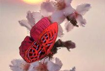 Farfalla ♥️