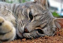 cat as a model...