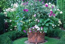 Container Gardening / by Sonya Booton
