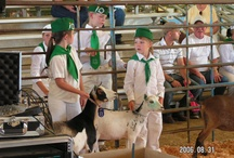 4-H in Lake County