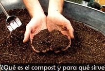 HUERTA /PLANTAS