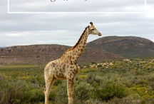 South Africa Travel Inspiration
