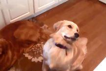 Animals / Dogs etc