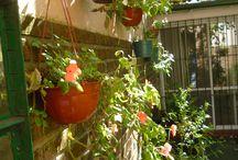 Mis plantas / Fotos tomadas en el jardín de mi casa.