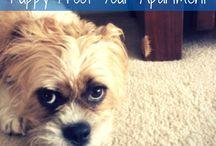 Puppy Parker