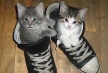 Gatti / coccole e tante risate