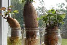 zahrada a sadenie