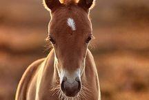Animals   / by Brandi Larkin