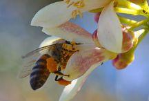 schütze die Bienen