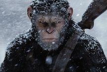 alba del pianeta delle scimmie